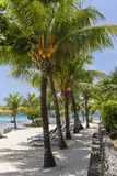 Coconut Trees on Lighthouse Point Royalty Free Stock Photos