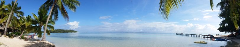 Coconut Trees Near Ocean and Dock Stock Photo