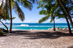 Coconut Trees Near Ocean With Waves during Daytime Stock Photos