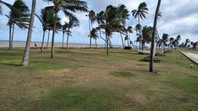Coconut trees near the sea stock image