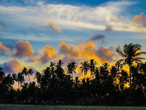 Coconut Trees Near Seashore during Sunset Photograph Royalty Free Stock Photos