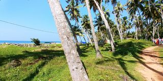 Coconut trees next to an access path to a fishing village in southern India and a group of people. Near the seashore in southern India live fishermen. Near the royalty free stock image