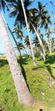 Coconut trees next to an access path to a fishing village in southern India and a group of people. Near the seashore in southern India live fishermen. Near the stock photography