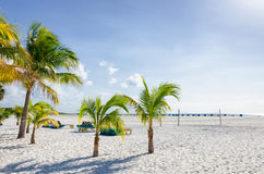Coconut trees next to the beach Royalty Free Stock Images