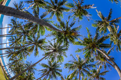 Coconut trees at nha trang beach in vietnam. A fish eye view of coconut trees at nha trang beach in Vietnam stock photography