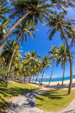 Coconut trees at nha trang beach in vietnam 2 Royalty Free Stock Images