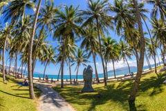 Coconut trees at nha trang beach in vietnam 3. A fish eye view of the beach and coconut trees at nha trang beach in Vietnam royalty free stock image