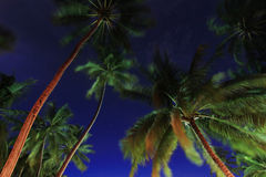 Coconut trees at night , Maldives Royalty Free Stock Image