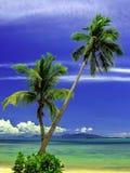 Coconut Trees On The Beach Royalty Free Stock Photos