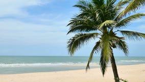 Coconut trees over beach with blue sky cha-am thailand.  stock footage