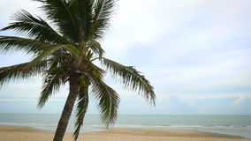 Coconut trees over beach cha-am thailand.  stock video footage