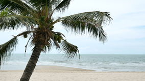Coconut trees over beach cha-am thailand.  stock video
