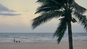 Coconut trees over beach on evening cha-am thailand.  stock video footage
