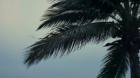 Coconut trees over beach on evening cha-am thailand stock video