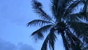 Coconut trees over beach on twilight time cha-am thailand.  stock video footage