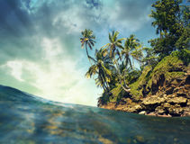 Coconut trees over the sea Stock Image