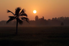 Coconut trees and paddy fields in silhouette. Stock Image