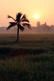 Coconut trees and paddy fields in silhouette. Royalty Free Stock Photos