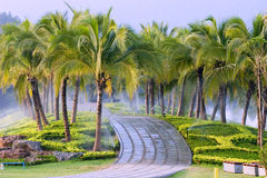 Coconut trees in the park. Stock Photography