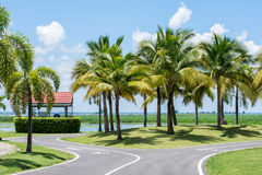 Coconut trees in the park. Royalty Free Stock Photos