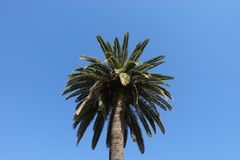 The coconut trees stock image