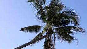 Coconut trees at Phu Quoc island, Kien Giang province, Vietnam. Ham Ninh beach, Silhoutte of Coconut trees , Phu Quoc island, Kien Giang province, Vietnam. Phu stock video footage