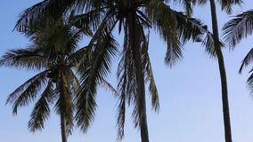 Coconut trees at Phu Quoc island, Kien Giang province, Vietnam. Silhoutte of Coconut trees , Phu Quoc island, Kien Giang province, Vietnam. Phu Quoc is blessed stock video footage