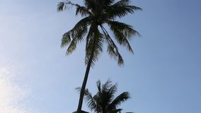 Coconut trees at Phu Quoc island, Kien Giang province, Vietnam stock video