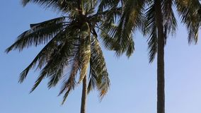Coconut trees at Phu Quoc island, Kien Giang province, Vietnam. Coconut trees in in the sun, Phu Quoc island, Kien Giang province, Vietnam. Phu Quoc is blessed stock video footage