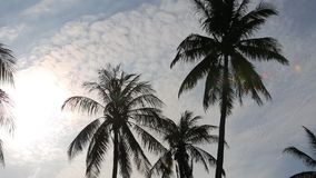 Coconut trees at Phu Quoc island, Kien Giang province, Vietnam. Sun, Silhoutte of Coconut trees , Phu Quoc island, Kien Giang province, Vietnam. Phu Quoc is stock footage