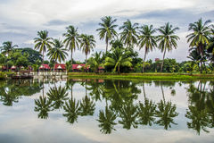 Coconut trees and reflections Stock Images