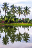Coconut trees and reflections Stock Photos