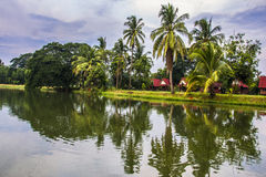 Coconut trees and reflections Royalty Free Stock Image