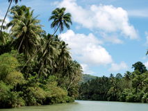 Coconut trees by river Stock Photo