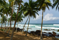 Coconut Trees on a Rocky Beach Royalty Free Stock Photos