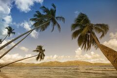 Coconut Trees in Sea Shore during Daytime Royalty Free Stock Image