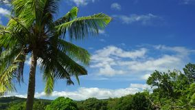 Coconut trees. A 37-second full HD footage of coconut palm trees swaying in the summer wind with the blue skies and moving clouds in the background stock video