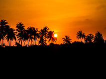 Coconut Trees and the setting sun Stock Photo