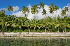 Free Coconut Trees Shoreline Huahine French Polynesia Stock Image - 91540331
