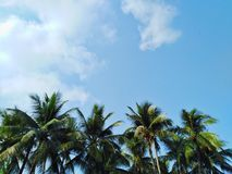 Coconut trees, sky view, beautiful clouds royalty free stock photo