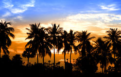 Coconut trees and sun set Royalty Free Stock Photo