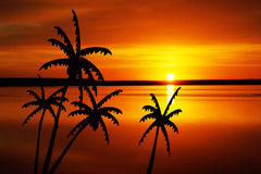 Coconut trees at sunset Stock Images