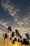 Coconut trees at sunset Royalty Free Stock Images