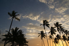 Coconut trees at sunset Royalty Free Stock Photography