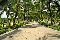 Coconut trees surround two sides of the road. Stock Photos