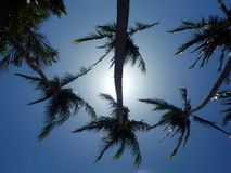 Coconut Trees Tamarindo Costa Rica. Looking up at the sun through palm trees at Tamarindo Costa Rica Royalty Free Stock Photography