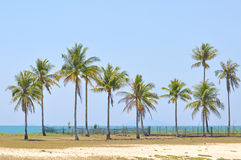 Coconut trees under blue sky at the beach of south china sea Stock Photo