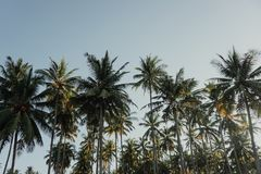 Coconut Trees Under Blue Sky at Daytime Stock Image