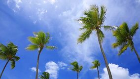 Coconut trees under blue sky . Top of coconut palm on sky background in caribbean stock footage