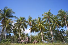 Coconut trees and wooden huts by the beach Stock Image